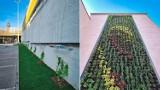 Chorzów inwestuje w zieleń. Ponad 400 posadzonych drzew i zielona ściana przy Chorzowskim Centrum Kultury to nie wszystko