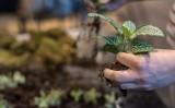 Nie wyrzucaj niechcianych roślin. Schronisko znajdzie im nowy dom