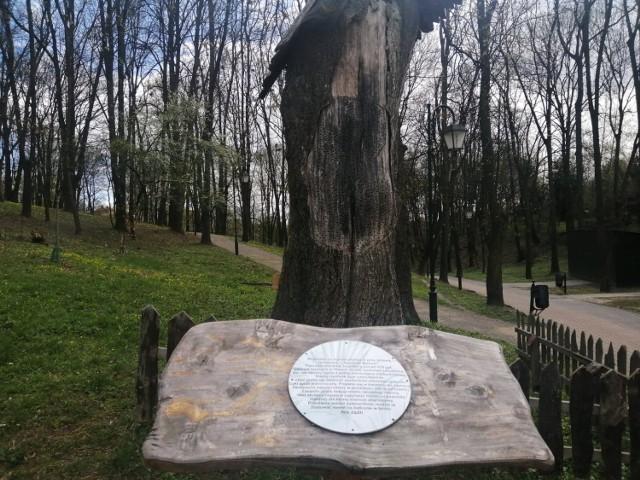 W pniu drzewa, w którym powstał ul zamieszkały nowe rodziny pszczół murarek.