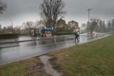 Piesi w Toruniu przechodzą przez jezdnię w niedozwolonych miejscach