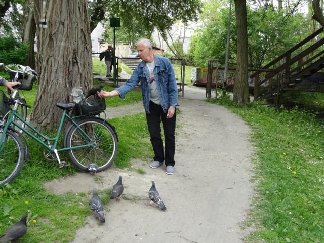 Pan Antoni wraz z kolegą co kilka dni dokarmiają gołębie. A te jedzą im z ręki.