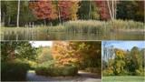Tarnów. Złota polska jesień w Parku Piaskówka. Drzewa mienią się kolorami i przyciągają spacerowiczów [PAŹDZIERNIK 2021]