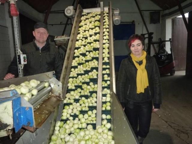 Maciej i Beata Przybylscy z Szostki obraną i zapakowaną cebulę sprzedają od kilkunastu lat.
