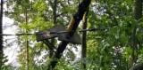 Park linowy w Rulewie zniszczony przez nawałnicę. Ogromne straty. Zobacz zdjęcia