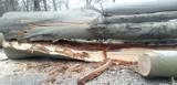 Lubliniec. Miasto wylicza, które drzewa musiało ściąć i dlaczego. Gdzie dokonano wycinki?