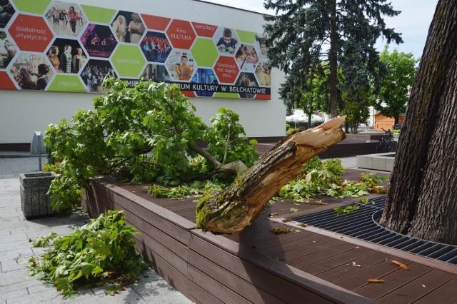 W wyniku burz w niemal każdej części Bełchatowa zostały połamane gałęzie czy drzewa, trwa usuwanie szkód.