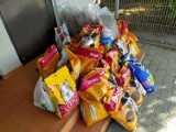 Ostrów: schronisko organizuje zbiórkę. Wesprzyj psiaka lub kociaka!