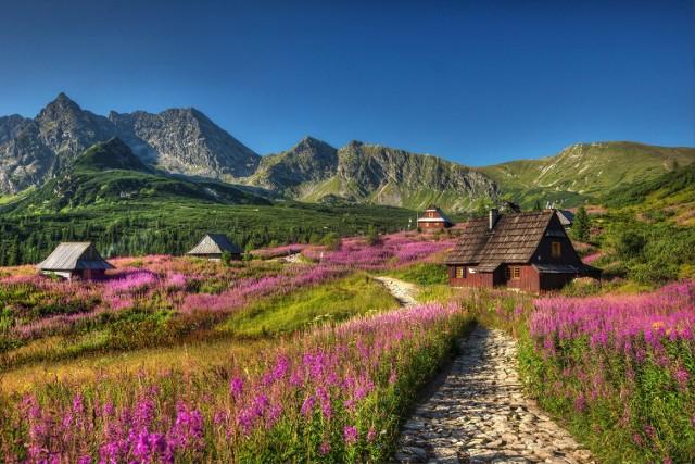Hala Gąsienicowa to w potocznym rozumieniu nazwa północnej części Doliny Gąsienicowej w Tatrach. Nazwa pochodzi od licznego w Zakopanem rodu Gąsieniców, który w XVII w. był jej właścicielem. Otoczona skalistymi szczytami połać zieleni jest szczególnie piękna w sierpniu, kiedy kwitnie na niej wierzbownica kiprzyca - różowy kwiat z rodziny wiesiołkowatych.  Uwaga! Z powodu pandemii wejście na Halę Gąsienicową jest obecnie zamknięte.