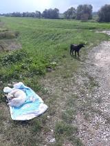 Dołęga: ktoś porzucił sukę i trzy małe szczeniaki oraz ojca młodych