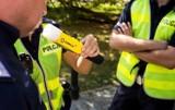 Bytom: pijany kierowca zatrzymany dzięki czujnemu mieszkańcowi. 25-latek w rękach policji