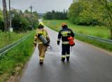 Strażacy usuwali plamę ropy z drogi powiatowej Nowe Huty-Zagony