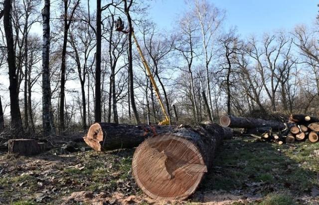W lutym tego roku w parku Strzeleckim wycięto ponad 400 drzew, które kolidowały z projektem. Część z nich mogła zostać