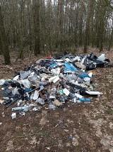 Gmina Czerniejewo. Nielegalne składowisko części samochodowych w lesie