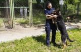 Warszawa. Cztery nowe psy rozpoczęły służbę w policji. Byliśmy w laboratorium kryminalistycznym, aby zobaczyć ich pracę