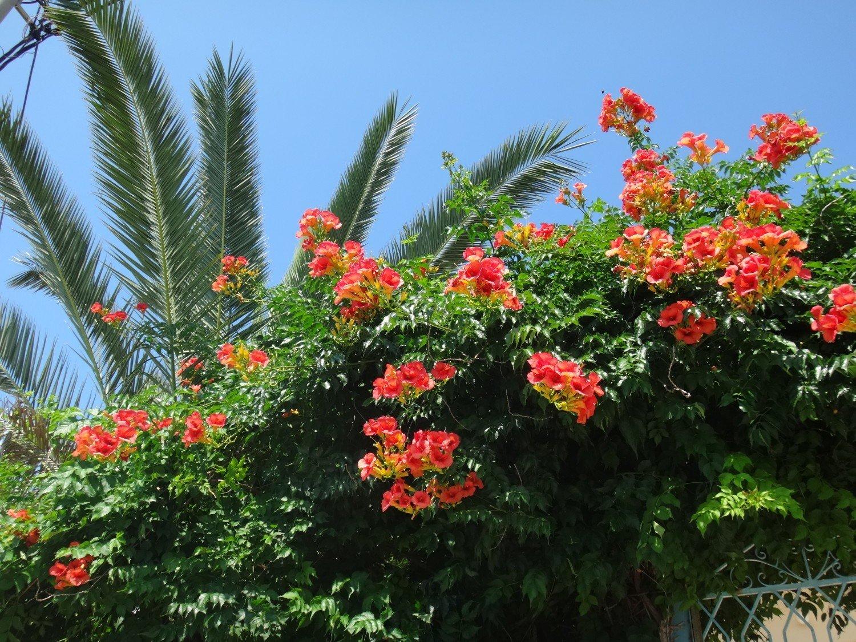 Kwiaty I Owoce Grecji Zdjecia Zielona Gora Nasze Miasto