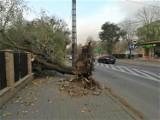 Wichura w powiecie łęczyckim. Połamane drzewa i zerwany dach ZDJĘCIA