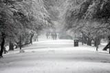 Pogoda na zimę 2020/2021: Zobacz pierwsze długoterminowe prognozy. Czy w tym roku będzie zima stulecia?