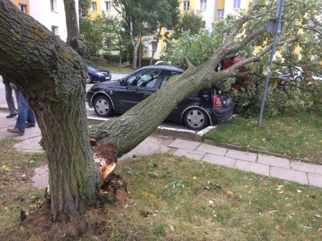 Po burzy, która przeszłą 12 lipca strażacy interweniują niemal w każdej gminie powiatu świeckiego
