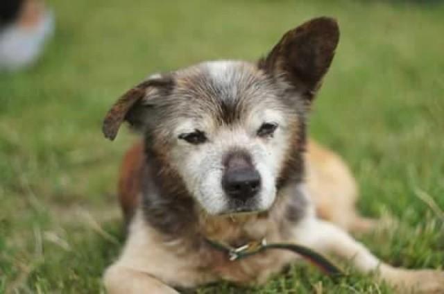 Dima swoje ostatnie dni spędził w nowym domu. Gdy trafił do schroniska dla zwierząt, miał już 21 lat