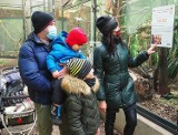 Wystawa męskich narządów miłości u zwierząt w łódzkim ZOO przyciągnęła zwiedzających ZDJĘCIA