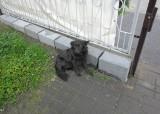 Gdzie się podziały dwa bezdomne psy ze Skierbieszowa?