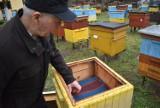 Robinie akacjowe wycinane na potęgę. Znikają pszczele pasieki w okolicach Krosna Odrzańskiego, w innych spada produkcja