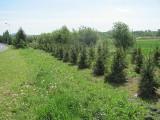 Ponad pół tysiąca nowych drzew