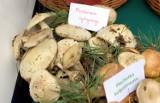 Jak rozróżnić grzyby jadalne od trujących? (ZDJĘCIA)