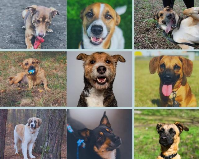 Aby zobaczyć wszystkie zdjęcia psów gotowych do adopcji, należy przejść do galerii. --->