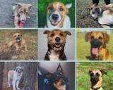 Psy ze schroniska w Poznaniu czekają na nowy dom [ZDJĘCIA]