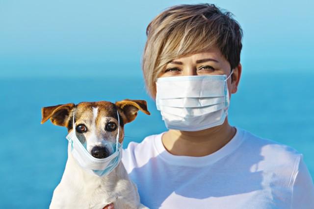 Psy mogą zarażać się od opiekunów, nawet tych bezobjawowych, i w przypadku infekcji nie wykazywać żadnych symptomów