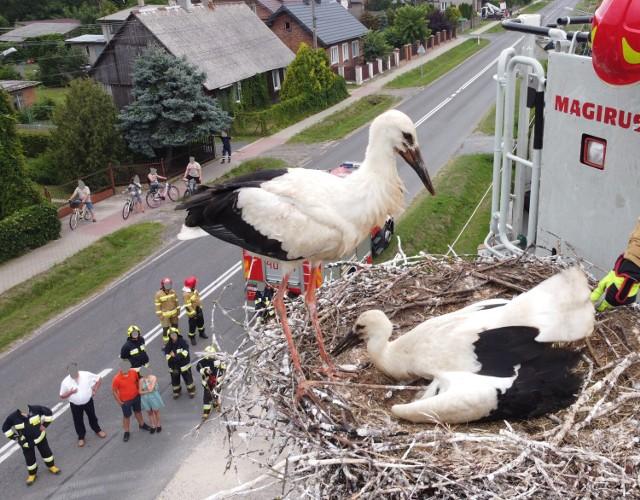 Strażacy i pracownicy zakładu energetycznego pomogli bocianowi w Wadlewie