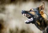 Te rasy psów są agresywne. Jeśli chcesz takiego psa, musisz mieć zezwolenie. Takie psiaki są nie dla każdego