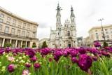 Centrum stolicy w kwiatach i leżakach. Startują Ruchome Ogrody Warszawy i Punkty Porad Ogrodniczych