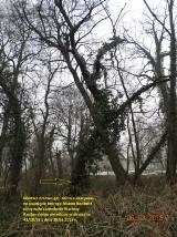Kolejna wycinka drzew w Raciborzu. Tym razem przy ul. Gdańskiej/Dolnej