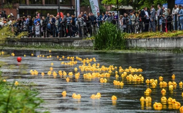 """Żółte kaczuszki ścigały się dziś w szczytnym celu. Pieniądze z cegiełek zostaną przeznaczone na wsparcie niepełnosprawnych sportowców, aby z sukcesami reprezentowali nasz kraj na Paraolimpiadzie w Tokio.   Można było wygrać cenne nagrody, m.in. telewizor lub rower. Znalazła się też nagroda pocieszenia dla ostatniej kaczki dziwaczki! Organizatorem wyścigu było Rotary Bydgoszcz Stare Miasto.  Tak się bydgoszczanie bawili podczas """"Ster na Bydgoszcz 2017"""""""