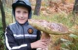 Nieprawdopodobne znalezisko na grzybobraniu pod Tarnowem! Ten grzyb-olbrzym ważył prawie dwa kilogramy! [ZDJĘCIA] 12.11.20