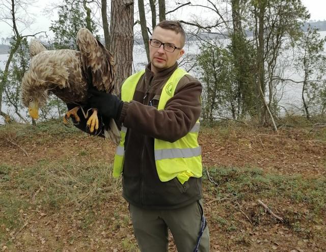 Leśniczy Rafał Milewski z  uratowanym bielikiem, którego niedawno przekazano do Ośrodka Rehabilitacji Ptaków Drapieżnych