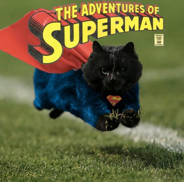 Ten kot stał się hitem internetu! Zobacz dlaczego [GALERIA]