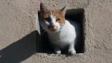 Koty wolno żyjące nie pozostaną bez pomocy. Miasto ma zapewnić im opiekę i schronienie