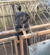 Psy mieszkały w fatalnych warunkach. Interwencja wolontariuszy i policji w miejscowści Żaba w powiecie namysłowskim