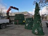 Zielona Góra stroi się na Boże Narodzenie. Coraz więcej choinek w mieście!