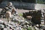 Baby boom w toruńskim Ogrodzie Zoobotanicznym. Zobacz maluchy na zdjęciach