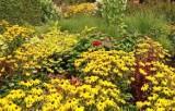 Poznaj najpiękniejsze żółte kwiaty. TOP 15 roślin kwitnących na żółto - od wiosny do jesieni