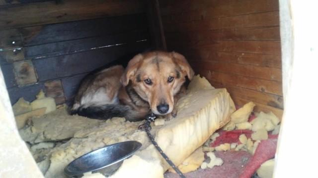 Zima to wyrok dla psów na łańcuchu! Nie tylko Luna czeka na dom