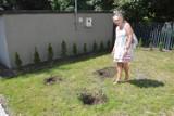 Opole. Złodziej kradnie rośliny. Jedna ze wspólnot mieszkaniowych zrobiła sobie piękny ogród i jest teraz okradana z drzewek oraz kwiatów