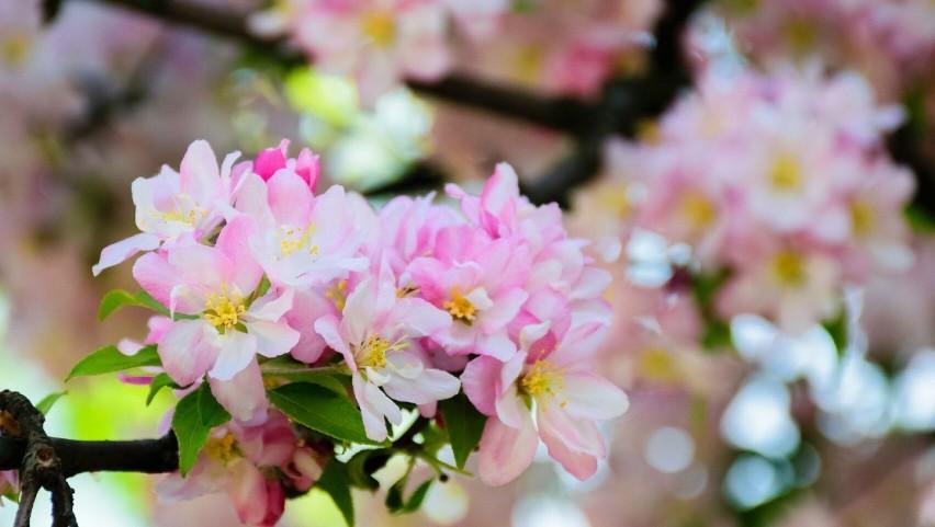 Kwiecień w ogrodzie, na balkonie i na działce. Które prace trzeba wykonać właśnie teraz?
