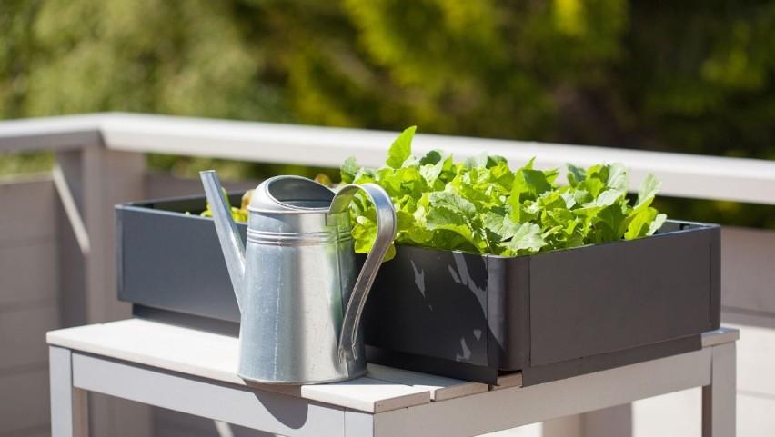 Nie ma co się jeszcze rozpędzać z sadzeniem na balkonie –...