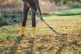Jak przygotować ogród na zimę, czyli październik w ogrodzie. Oto 13 prac, które trzeba wykonać. Wśród nich zbiory i sadzenie