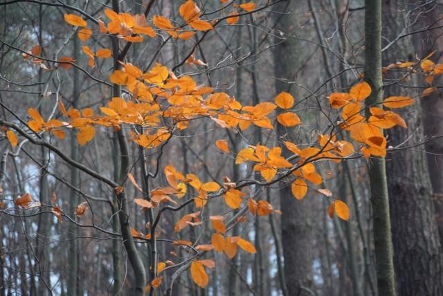 Jesień 2019 w lesie na Paprocanach